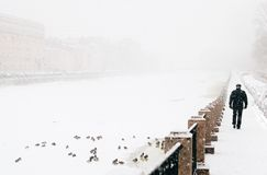Man walking along the shore in the fog. Ducks sit on a frozen river near the coast, which goes away and hides behind of heavy snowfall stock images