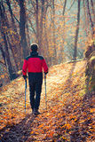 Man walking in autumn forest Royalty Free Stock Photos
