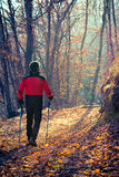Man walking in autumn forest Stock Images