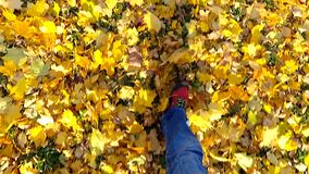 Man walking on a autumn leaves. Slow motion. stock video footage