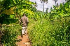 Man walking through banana plantation is East Africa Stock Photography
