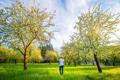 Man walking in beautiful blooming garden in the morning. Summer stock photo