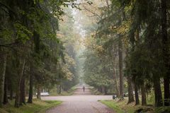 Man walking in beautiful forest Royalty Free Stock Photos
