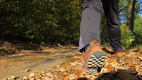 Man walking cross country trail in autumn forest Royalty Free Stock Photo