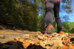 Man walking cross country trail in autumn forest Stock Image