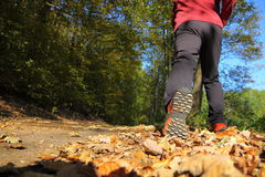 Man walking cross country trail in autumn forest Royalty Free Stock Images