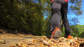 Man walking cross country trail in autumn forest Royalty Free Stock Image