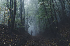 Man walking in dark mysterious forest with fog after rain Stock Photos