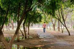 Man walking a dirt path with trees Royalty Free Stock Photography