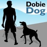 Man Walking Doberman Pinscher Dog Stock Photo