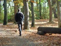 Man walking dog. Through fall foilage Stock Image