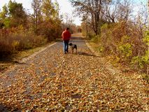 Man Walking the Dog in Autumn. Going for a Walk with his female rottweiler dog on a crisp colorful fall day Royalty Free Stock Image