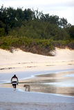 Man walking dog on beach. Rear view of man walking dog on sandy beach Stock Image