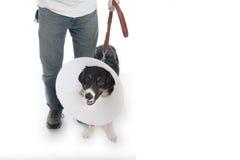 Man walking dog in cone Stock Photos