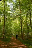 Man walking the dog in the forest Stock Photography