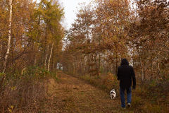 Man walking the dog in the forest at fall. Man walking the dog in forest in autumn with golden and brown leaves Stock Photo