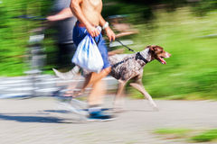 Man walking a dog Stock Images