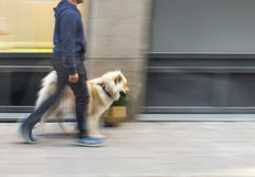 Man walking dog Royalty Free Stock Photography
