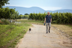 Man walking dog in the vineyards royalty free stock images