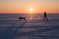 Man walking with a dog. In winter on a background of a beautiful sunset Royalty Free Stock Photography