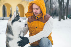 Man walking with dog winter time with snow in forest Malamute an Stock Image