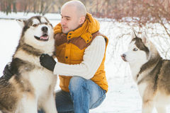 Man walking with dog winter time with snow in forest Malamute an Stock Images