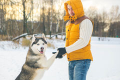 Man walking with dog winter time with snow in forest Malamute an Royalty Free Stock Photo