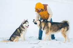Man walking with dog winter time with snow in forest Malamute an Royalty Free Stock Photography
