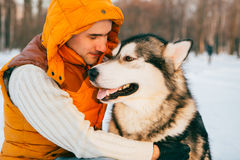 Man walking with dog winter time with snow in forest Malamute and Huskies friendship Stock Photos