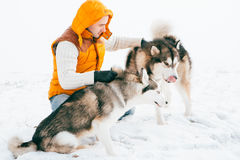 Man walking with dog winter time with snow in forest Malamute and Huskies friendship Royalty Free Stock Images