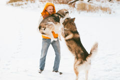 Man walking with dog winter time with snow in forest Malamute and Huskies friendship Stock Image