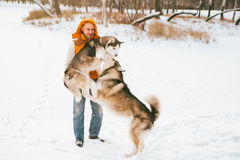 Man walking with dog winter time with snow in forest Malamute and Huskies friendship Royalty Free Stock Photos