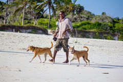 Man walking dogs on the beach Royalty Free Stock Image