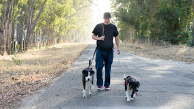 Man Walking Dogs on Country Road Stock Image