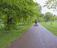 Man walking dogs in a large park Stock Photo