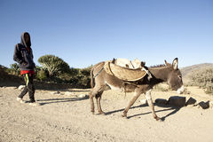 A man walking with a donkey, Ethiopia Royalty Free Stock Images