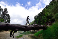 A man walking on fallen tree trunk on the balance Stock Images