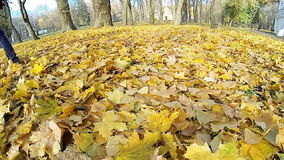 Man walking on the fallen yellow leaves. stock video