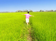 Man walking on field. Man walking on path between paddy field. Discover, exploration and a fun experience   in a sunny day Stock Image