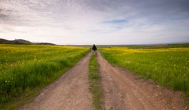 Man walking in the fields stock images