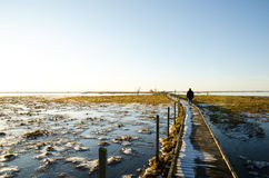 Man walking on footbridge. A footbridge suitable for disabled persons leading through the wetlands Royalty Free Stock Photo