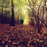 Man walking by footpath in dark misty forest in autumn Stock Photos