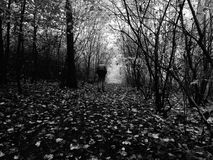 Man walking by footpath in dark misty forest in autumn Stock Image