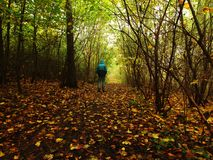 Man walking by footpath in dark misty forest in autumn Royalty Free Stock Image