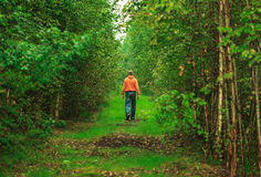 Man Walking in the Forest Royalty Free Stock Photo