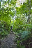 Man walking in a forest. A man with a black shirt walking into a lush green first on a path Stock Images