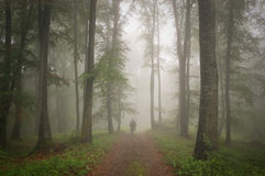 Man walking in forest with fog Royalty Free Stock Images