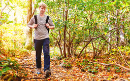 Man walking on a forest path Royalty Free Stock Image