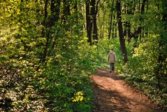 Man walking on a forest path in spring scenery stock images