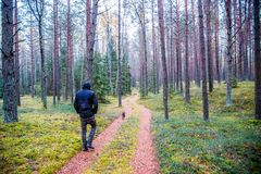 Man walking in forest and dog. Man is walking through forest road with his small black dog alone Stock Photo